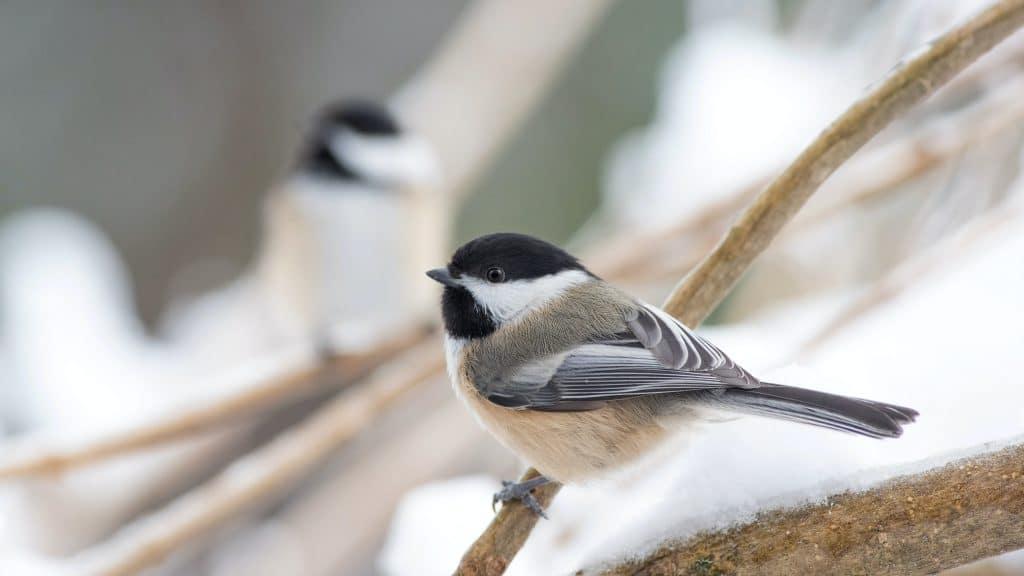 Bird Watching in Your Oregon Yard
